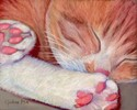 Kitty Sleeping (thumbnail)