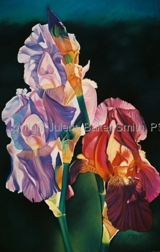 Painting--Pastels-FloralBearded Ladies