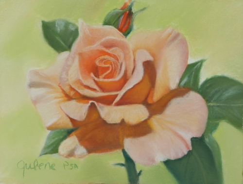 rose in pastel, orange rose (large view)