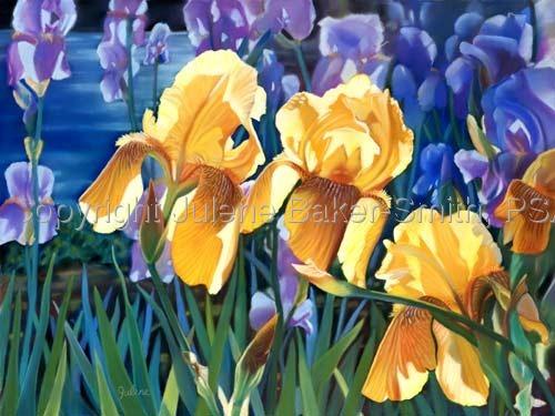 Iris Garden (large view)