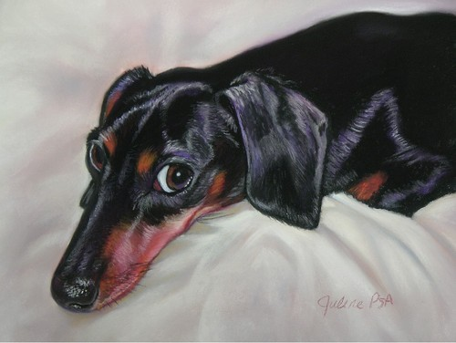 Doxie (large view)