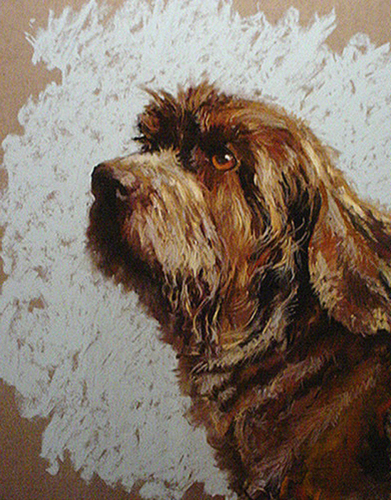 German WireHaired Pointer (large view)