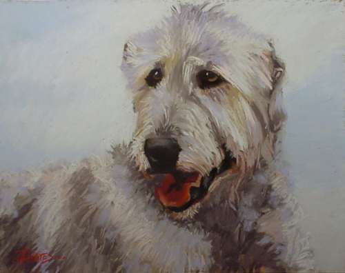 Irish Wolfhound (large view)