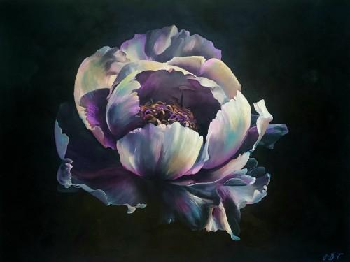 Lavender Peony by Jenny Benoit