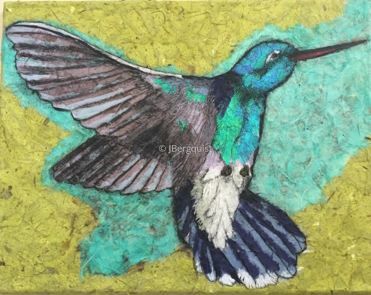 Hummingbird backing away (large view)