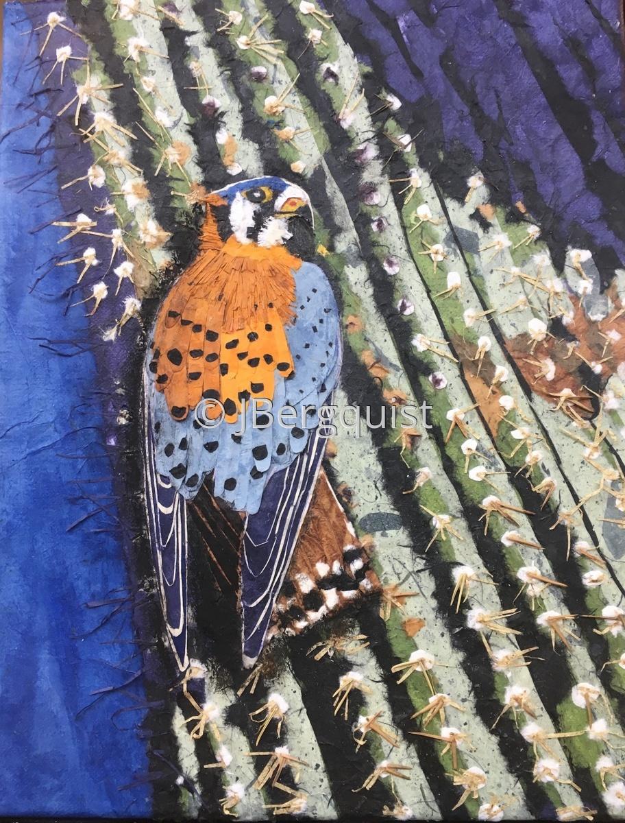 Kestrel on Cactus (large view)