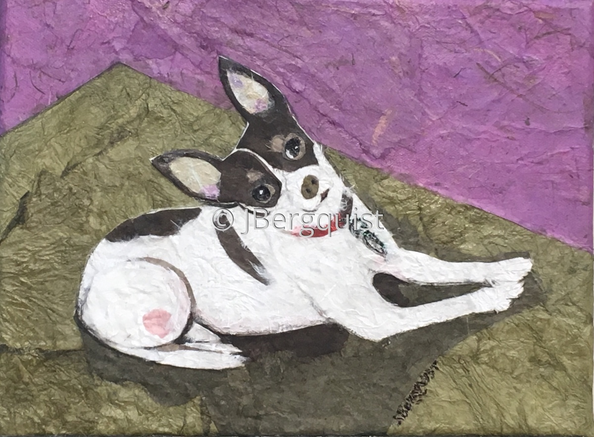 Chihuahua named Picasso (large view)
