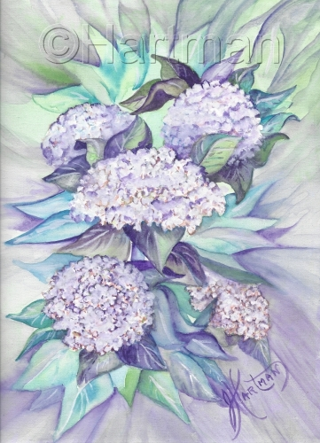 Lavender White Hydrangeas