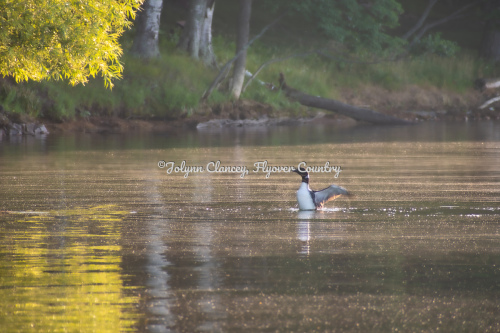 Loon Tranquility