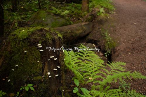 Life Springs Eternal