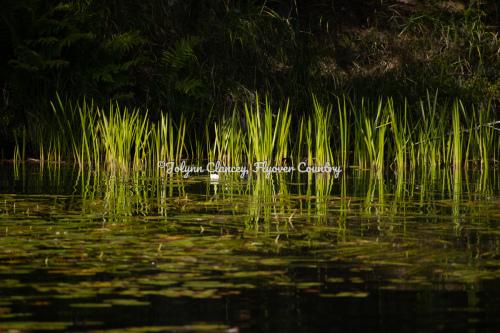 Quiet Lake 2