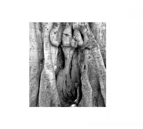 Tree Burl 2