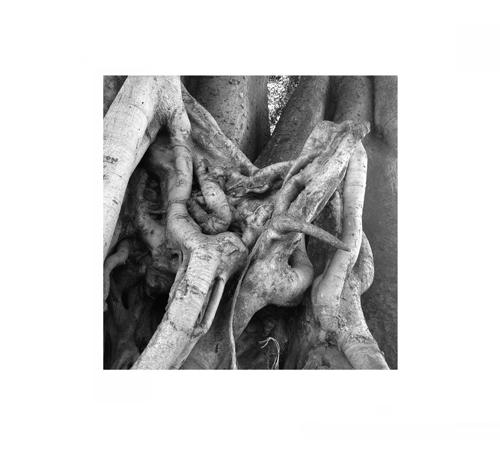 Tree Burl 3