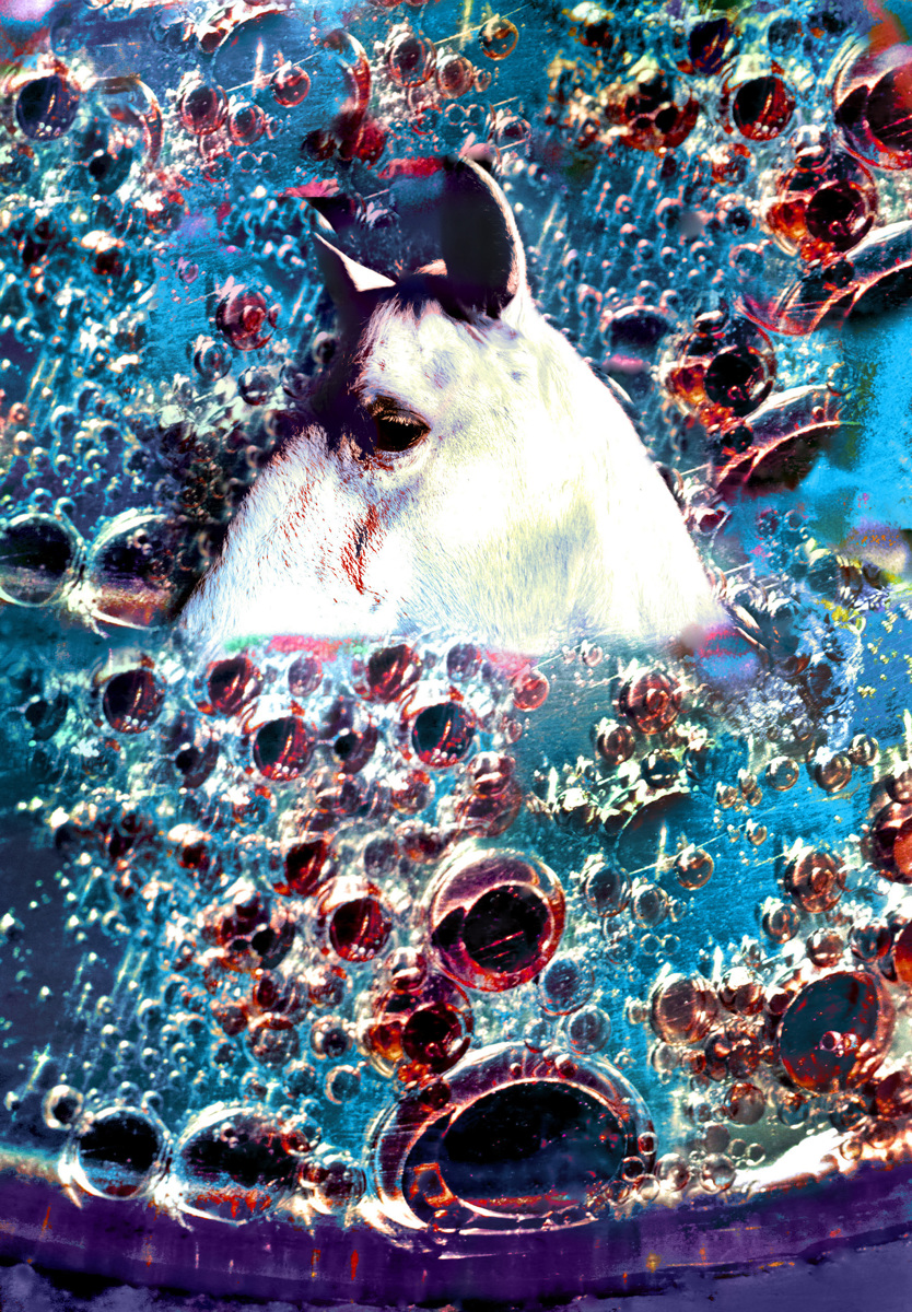 Horse Immersed In Soda (large view)