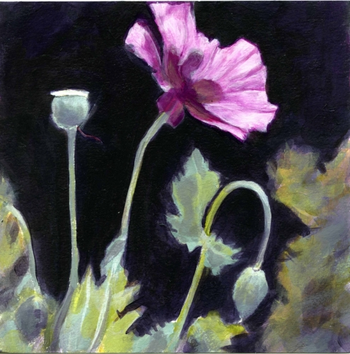 Sunlit - Icelandic Poppy