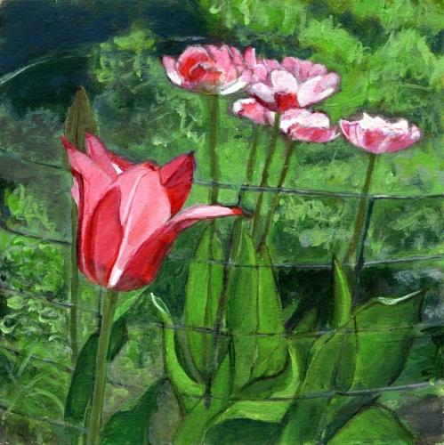 Corraled - Tulips