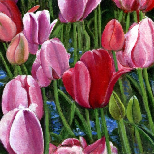 Masses - Tulips
