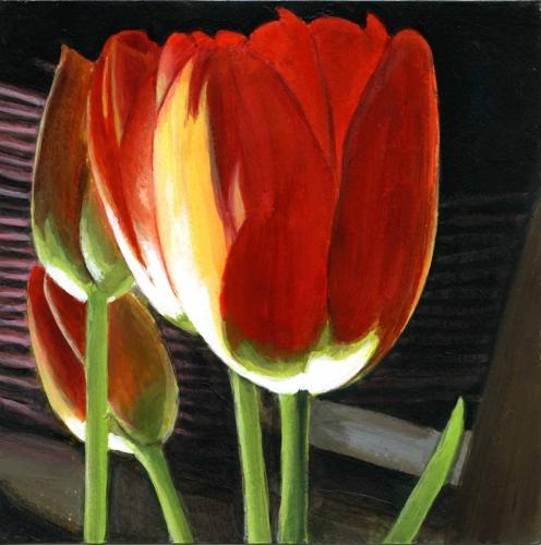 Spotlit - Tulips