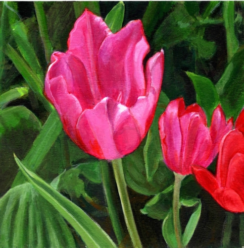 Red Trio - Tulips