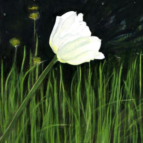 White Confection - Tulip