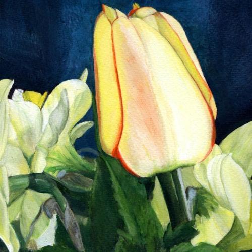 Blushing Apeldoorn Tulip, 1