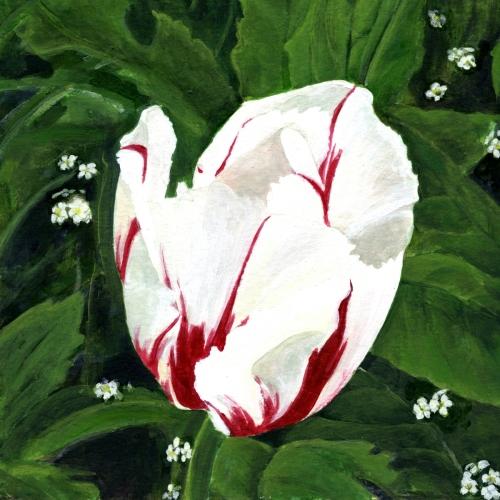 Ice Follies - Tulip