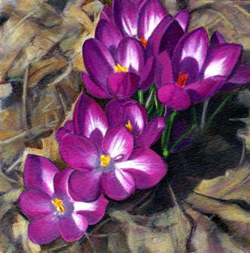 Spring Joy - Crocus