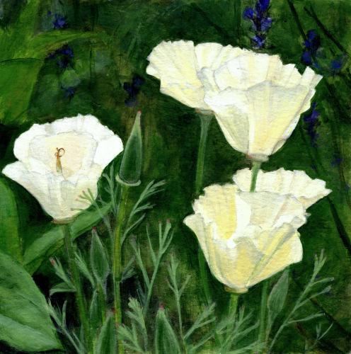 Blushing California Poppies