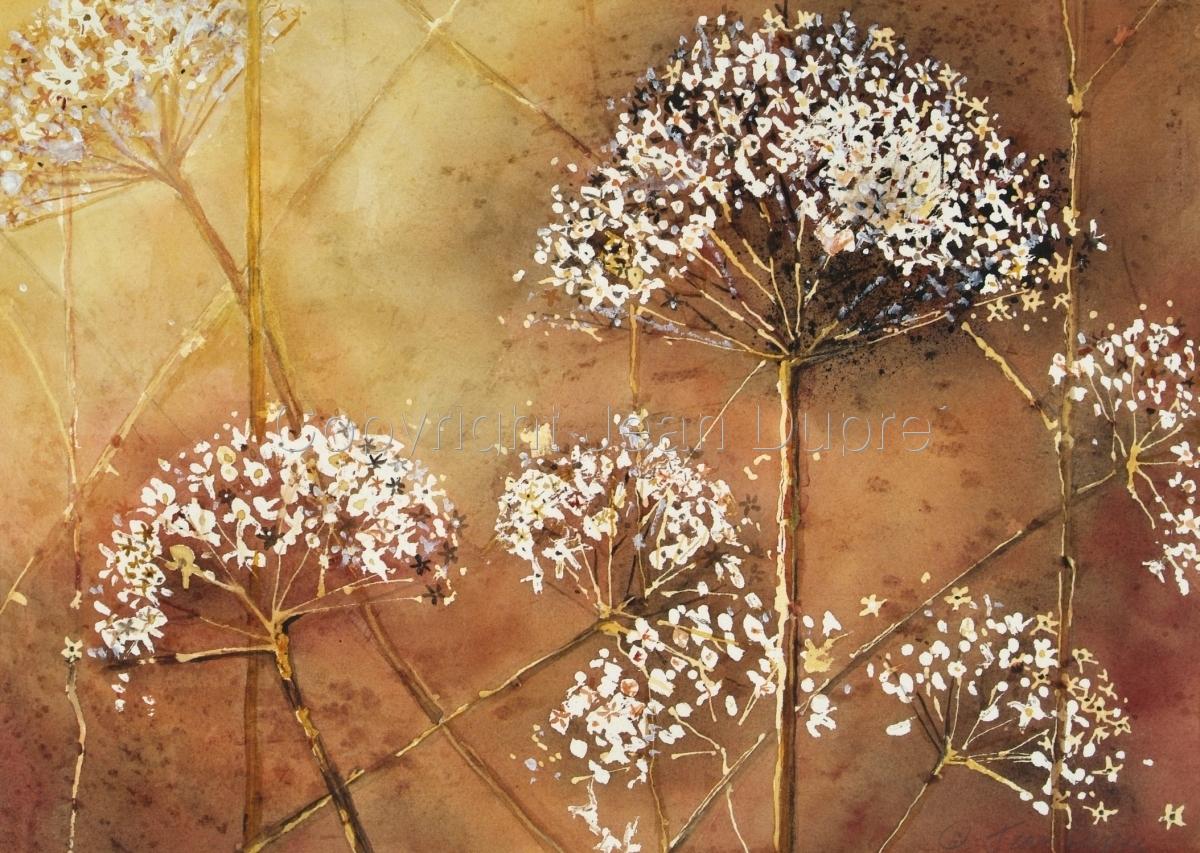 Strawflowers (large view)