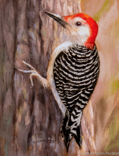 Red Belly Woodpecker by Jean Johnson Pechtel, Artist
