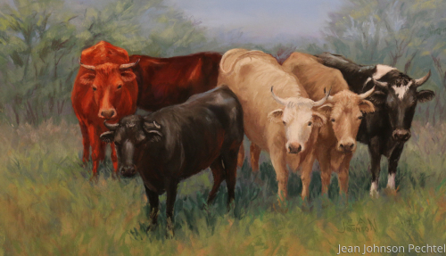 Roger's Cows