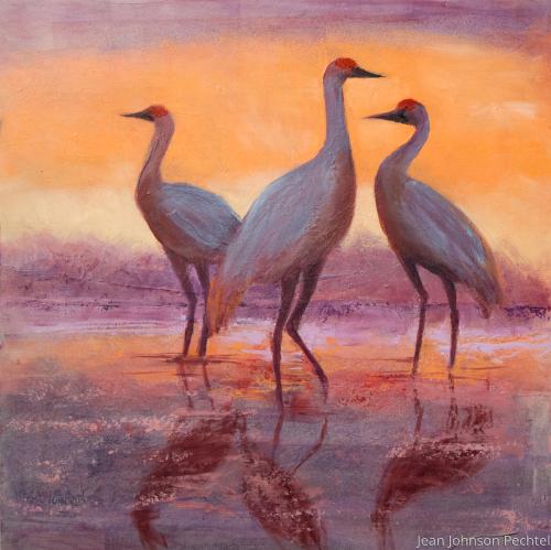 Sand Hill Crane Reflection