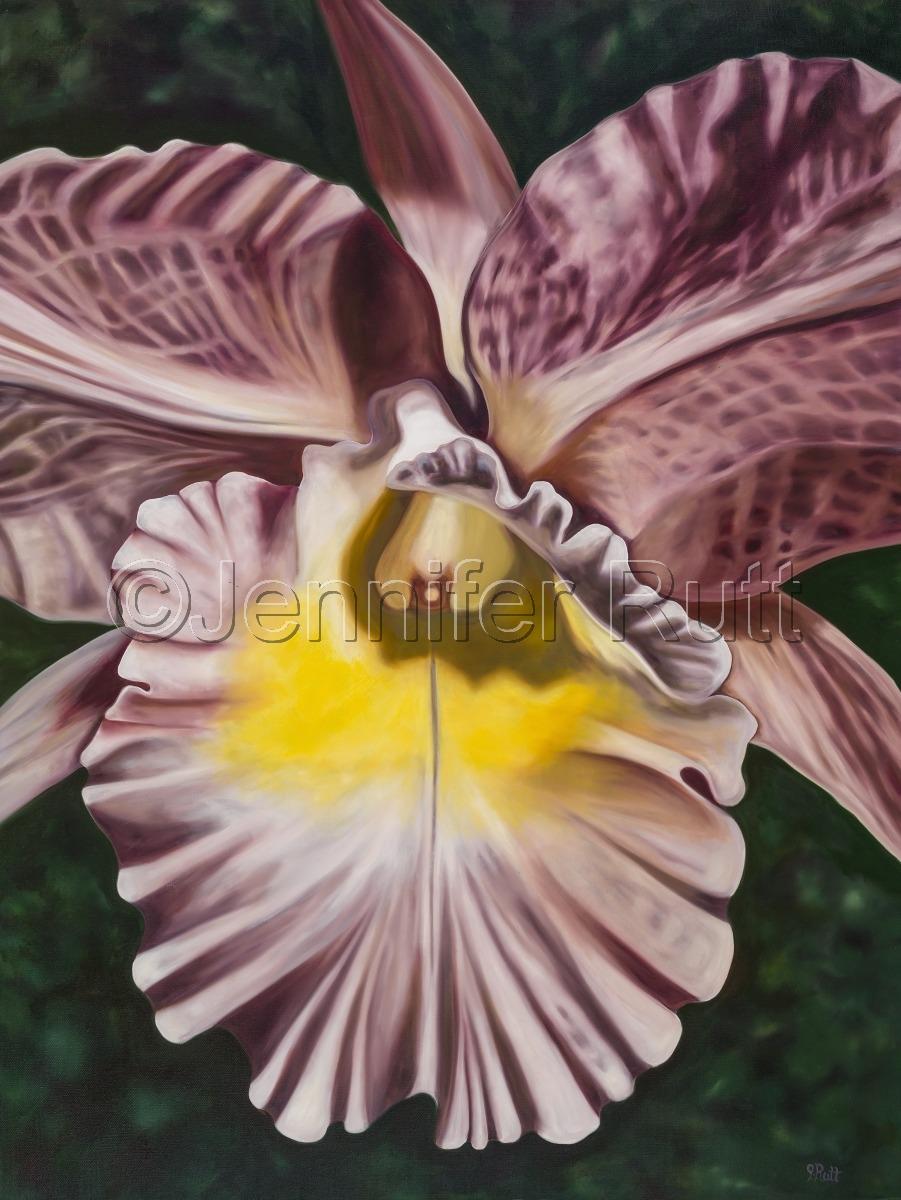 Moonlit Orchid (large view)