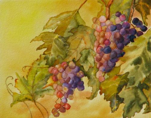 Grape Season is Here by Jessica  Wheeler