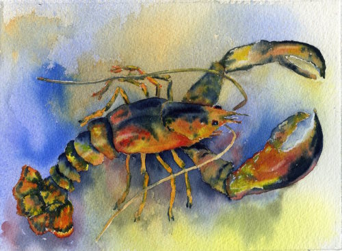 Lobster by Jessica  Wheeler