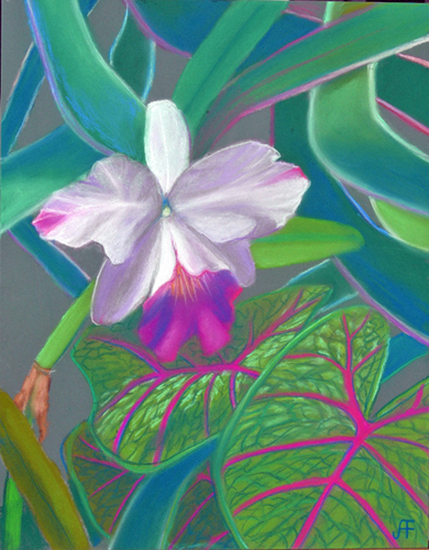 Cattleyas Orchid by Judi Forney Art