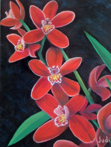 Christmas Orchid by Judi Forney Art