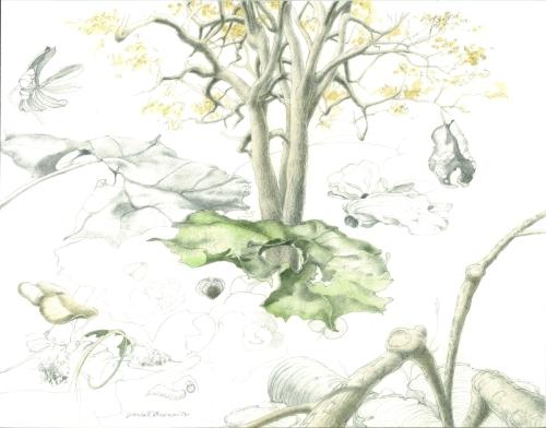 Sketch 3, Sycamore Studies by James V. Freeman