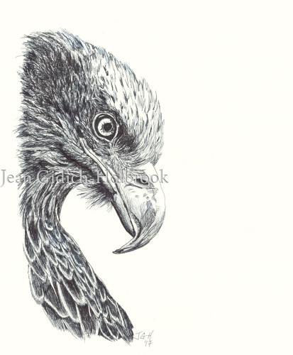 Eagle Study