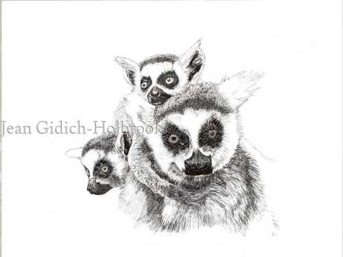 Ring Neck Lemurs