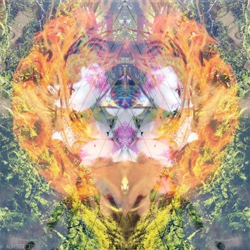 Flower of transformation