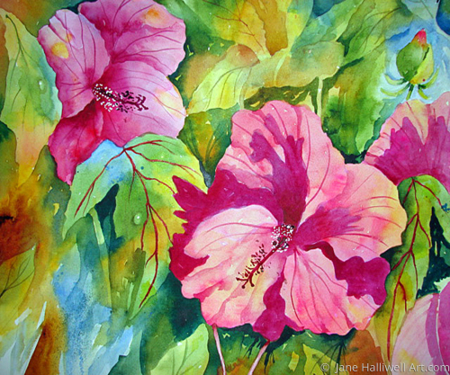 Hibiscus by  Jane Halliwell Art.com