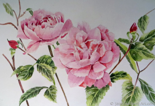 English Roses by  Jane Halliwell Art.com