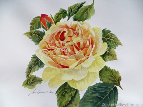 Yellow Rose by  Jane Halliwell Art.com