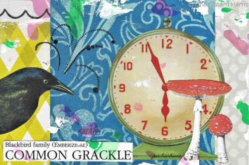 Common Grackle