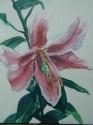 Tiger Lily (thumbnail)