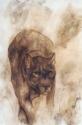 Lioness (thumbnail)