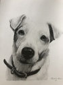 Jack Russell (thumbnail)