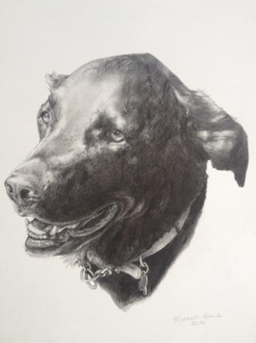 Z Dog