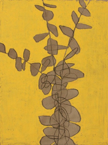 Yellow 5 Variation